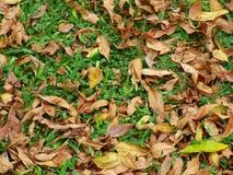 Blätter, die aus den Grund liegen Stockbilder