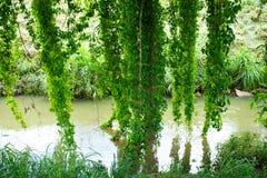 Blätter, die das Wasser berühren stockfotografie