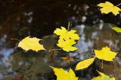 Blätter, die in das Wasser schwimmen Lizenzfreie Stockfotos