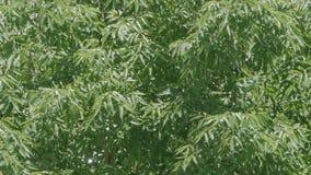 Blätter, die in den Wind sich bewegen stock video footage