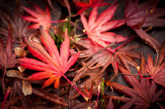 Blätter, die Farbe im Fall ändern Stockfoto