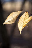 Blätter, die an hängen Stockfoto