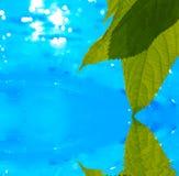 Blätter, die im Wasser sich reflektieren Stockbild