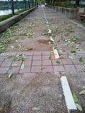 Blätter, die nach starken Winden fallen Stockfotografie