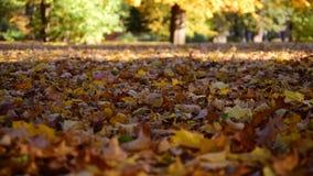 Blätter, die am Park fallen stock footage