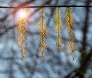 Blätter, die von einer Niederlassung hängen Stockbilder