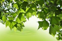 Blätter, die Wasser berühren Stockfotos