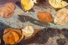 Blätter, die in Wasser schwimmen Stockfotos