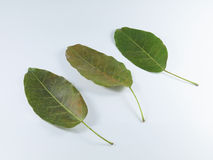 Blätter drei Stockfoto