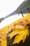 Blätter durch den See Lizenzfreies Stockbild