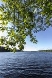 Blätter durch schwedischen See Stockfotos