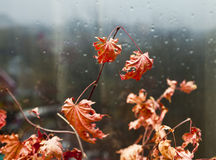 Blätter an einem Fenster Stockfotos