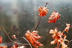 Blätter an einem Fenster Stockbild