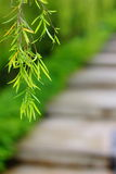 Blätter in einem Garten Lizenzfreies Stockfoto