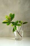 Blätter in einem Glas Stockfotografie