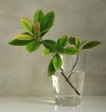 Blätter in einem Glas Stockfoto