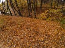 Blätter in einem Holz nahe einem See im Herbst stockfoto