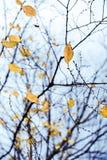 Blätter in einem kalten Herbst stockbild