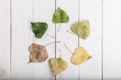 Blätter in einem Kreis auf Weiß Stockfotos