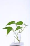 Blätter in einem Plastikcup Lizenzfreies Stockbild