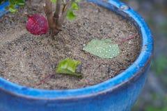 Blätter einer Anlage auf sandigem Boden Stockbild