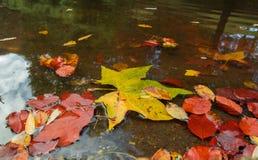 Blätter in einer Pfütze Stockfoto