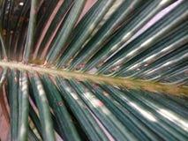 Blätter einer wild wachsenden Pflanze Lizenzfreie Stockfotos