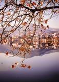 Blätter eines Baums Lizenzfreie Stockbilder