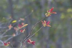 Blätter eines Baums lizenzfreies stockbild