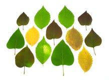 Blätter eines bunte Herbstes des Sets Stockfotografie