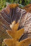 Blätter eingefroren Stockfotos