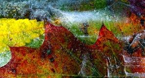 Blätter eingefroren im Eis Stockbilder