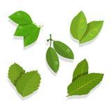 Blätter eingestellt Stockbild