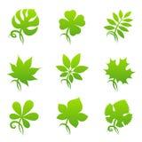 Blätter. Elemente für Auslegung. Stockfotografie