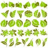 Blätter. Elemente für Auslegung. Stockbild