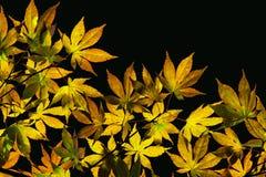 Blätter erhellen mit Licht lizenzfreie stockfotos