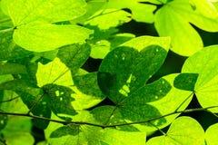 Blätter erhellt im Wald lizenzfreie stockbilder
