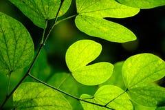 Blätter erhellt im Wald stockfoto