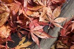 Blätter am Fall Stockfoto