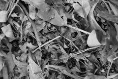 Blätter gefallen stockbilder