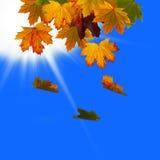 Blätter gefallen in den Himmel Stockfoto