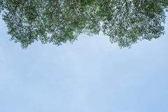 Blätter gegen den blauen Himmel Stockfotografie