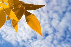 Blätter gegen den Himmel Stockfoto
