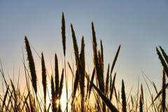 Blätter gegen die Sonne Lizenzfreie Stockfotografie