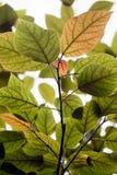 Blätter gegen Leuchte Lizenzfreie Stockfotos