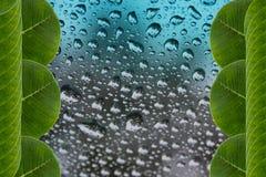 Blätter gestalten in den Wassertropfen auf Hintergrund Lizenzfreie Stockfotos
