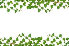 Blätter gestalten getrennt Stockfotos
