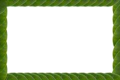 Blätter gestalten weißen Hintergrund Lizenzfreies Stockfoto