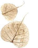 Blätter getrennt auf Weiß Stockbild