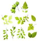 Blätter getrennt auf Weiß Stockfotos